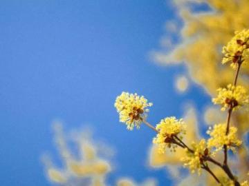 春天,隐藏在那温暖的春风里的唯美说说