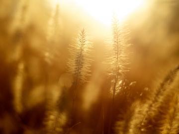 秋日出游度假的说说:我的肩上是风,风上是闪烁的星群