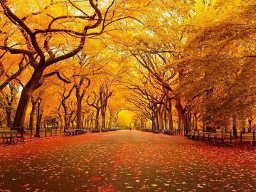 有关于秋天的伤感古诗词句