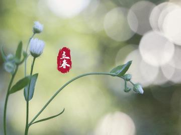 立春到,雨丝飘,短信祝福来打扰
