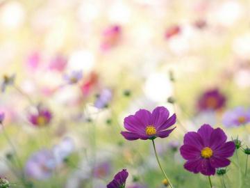 愿你的二月有春风的唯美说说