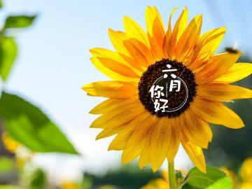 告别五月,迎接六月的积极阳光的正能量句子