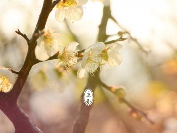立春到了,春也就开始了的祝福说说