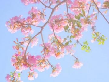 樱花开了的心情说说  没有什么可以阻挡春天的脚步