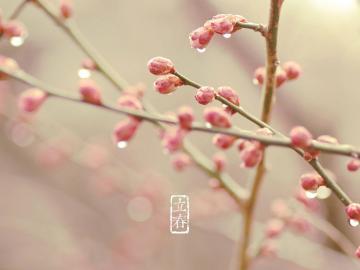 立春时节发朋友圈的唯美祝福句子