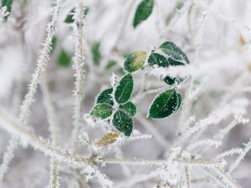 关于立冬时节的经典古诗词
