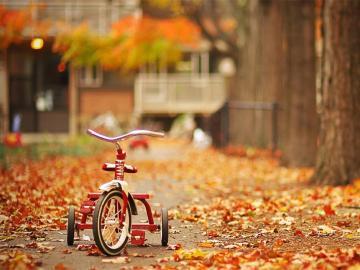 落叶知秋道一声秋分你好的说说
