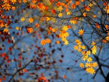 秋天来了的唯美句子说说