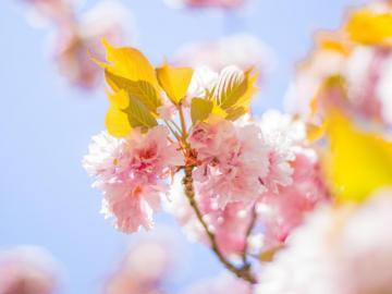 和春天说一声你好的唯美说说