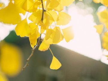 二十四节气秋分温馨祝福语