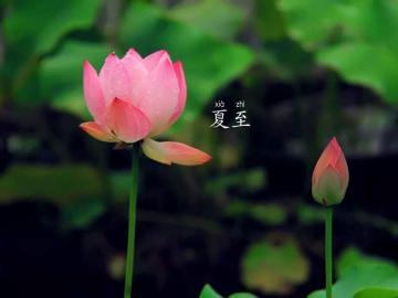 二十四节气夏至祝福说说 祝你夏至快乐