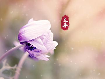 立春来了,对你的祝福漫山遍野