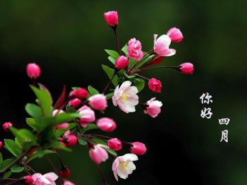 早安4月励志心语句子:生命不是用来比较,而是用来完成