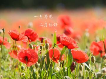 告别一月,走进春风二月的唯美说说