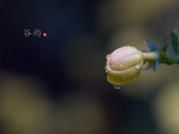 邂逅谷雨诗词,拥抱最后的春天
