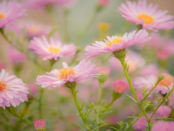 九月初九重阳节的古诗名句