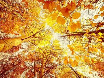 那些关于描写秋天的古诗词句
