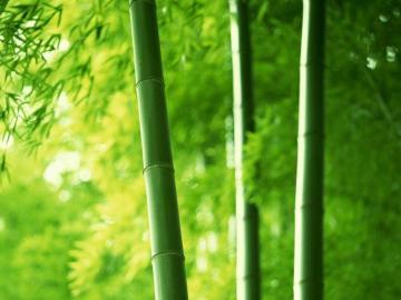 关于描写竹子的古诗词句