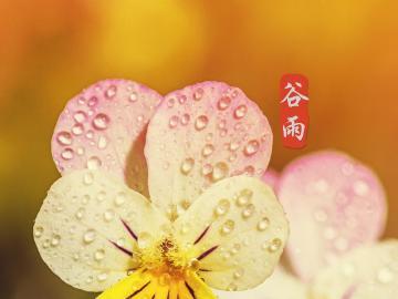 谷雨将近,道一声快乐的祝福说说