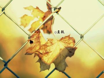 最新关于立秋的诗句