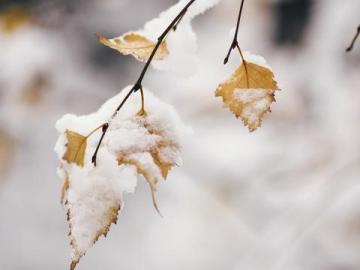 冬的伊始,立冬暖心祝福说说