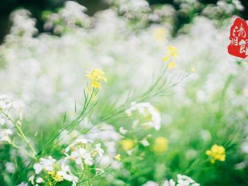 2020清明节祭奠亲人的说说短句 祈祷天堂的亲人们幸福快乐
