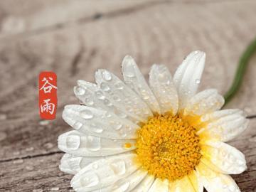 谷雨时节雨水丰,最美祝福送上