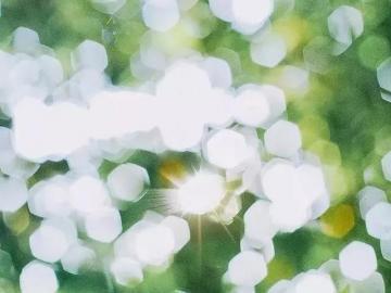 生活充满阳光的句子 心向阳光,才不会荒芜