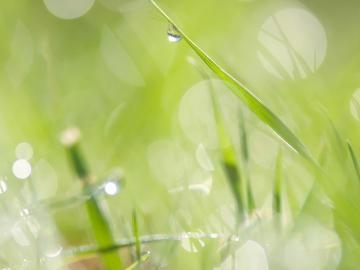 描写春天的唯美句子   揉弄着黄眉绿眼,舒展着轻软的胳膊
