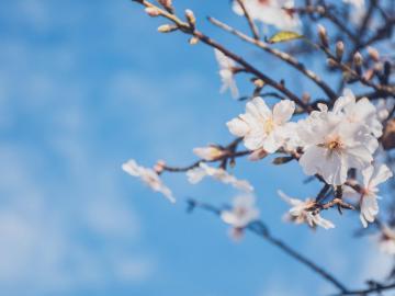 春暖花开的唯美句子  好春光,不可辜负