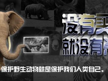 保护野生动物的宣传标语 保护野生动物,维护生态安全
