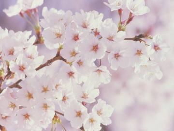 简单快乐的心态句子  人心换不来人心,认真也得不到情深