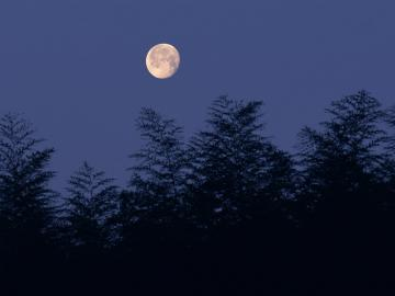 月圆人伤心的诗句