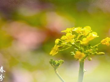 关于春分的祝福语精选  一年之计在于春