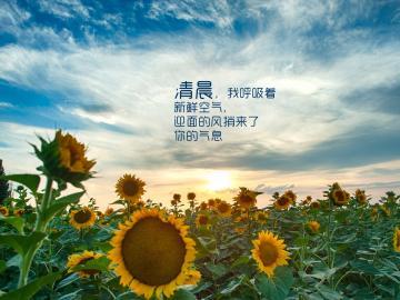 八月你好早安语:愿你喧闹如温阳