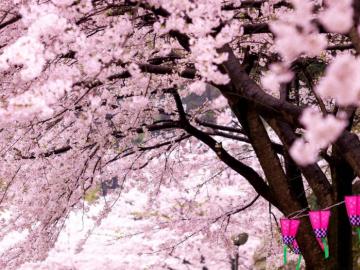 阳春三月到来的唯美说说
