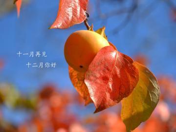 十一月缓缓流逝,十二月悄然而至的心情说说
