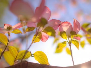 凛冬过后,春暖花开的唯美句子带图片说说