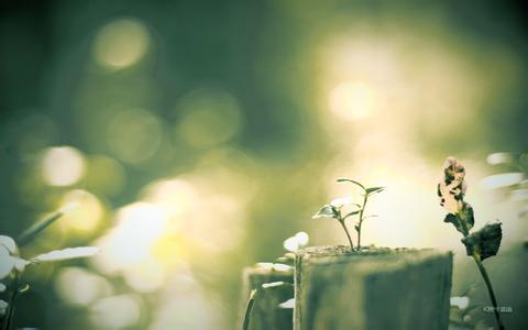 说说爱情伤感句子短语|说说爱情短语:暗恋是一个爱情自生自灭的过程