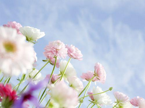 简单晚安心语 聪明是一种天赋,而善良是一种选择