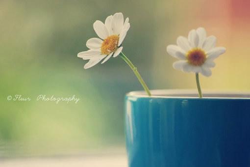 朋友圈一句话说说心情的早安心语配图 人生,因静而从容1