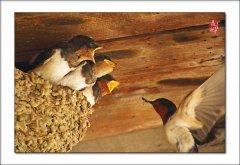 关于燕子的优美诗句古诗有哪些