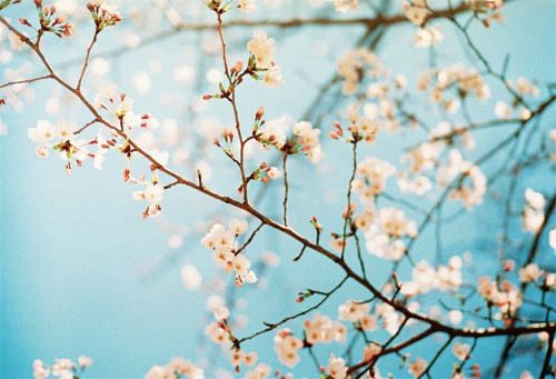 关于中秋节的古诗诗句大全