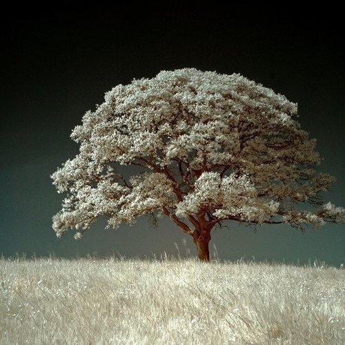 李白冬天的古诗_关于描写冬景的诗句古诗大全,古诗词-个性说
