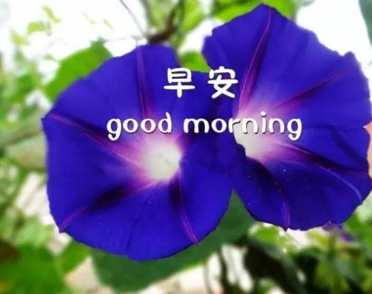 微信群唯美早上好温馨问候祝福语加图片大全