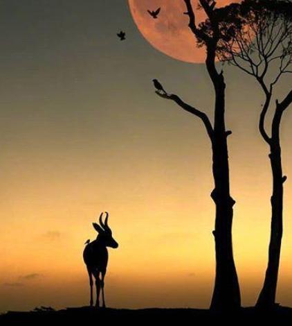 适合发朋友圈的晚安心语:活着,总有你看不惯的人,也有看不惯你的