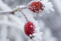 2018有关霜降的个性说说经典大全 关于霜降的感动祝福句子
