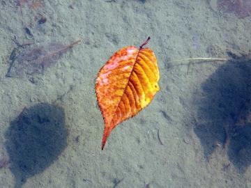 全新的秋分经典祝福说说