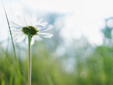 描写春天的唯美诗词   江天一色无纤尘,皎皎空中孤月轮