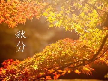 二十四节气秋分的谚语:秋分冷得怪,三伏天气坏